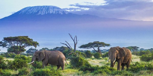 How to organize a Safari in Kenya in 10 steps (detailed guide)