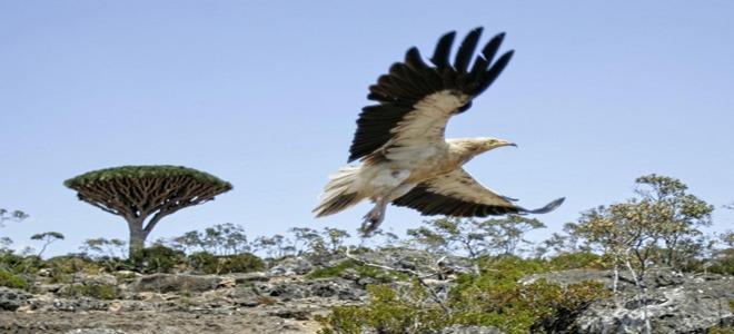 Socotra nature