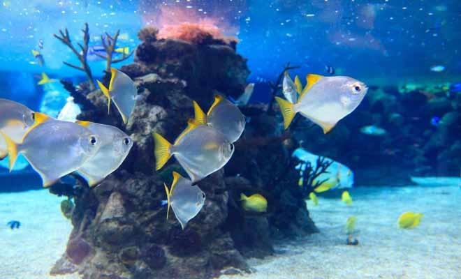 Aquarium Es Cap Blanc