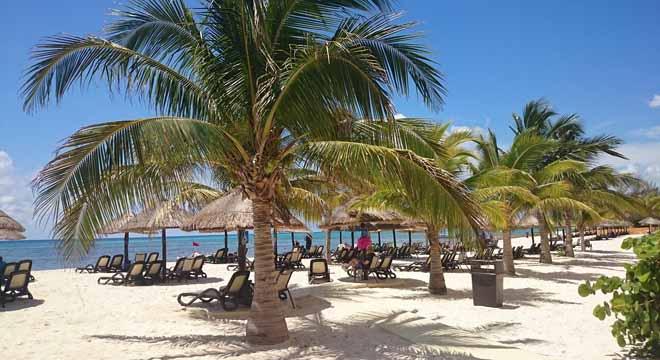 palms in Cancun